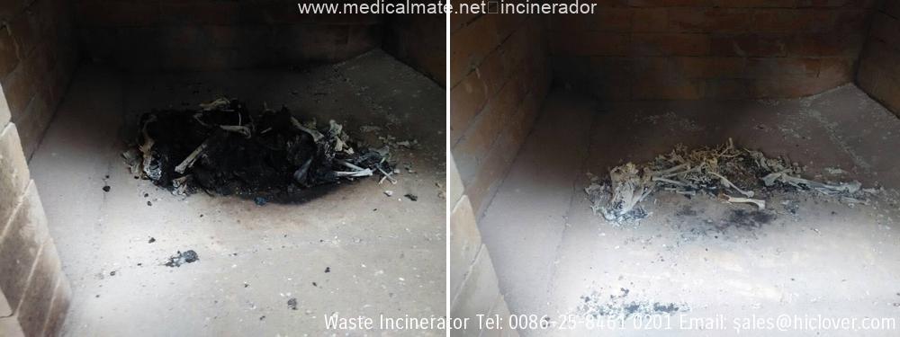 pet incineration equipment